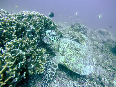 Bali & Gili Air