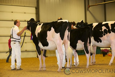 Autumn Opportunity Holstein 2017