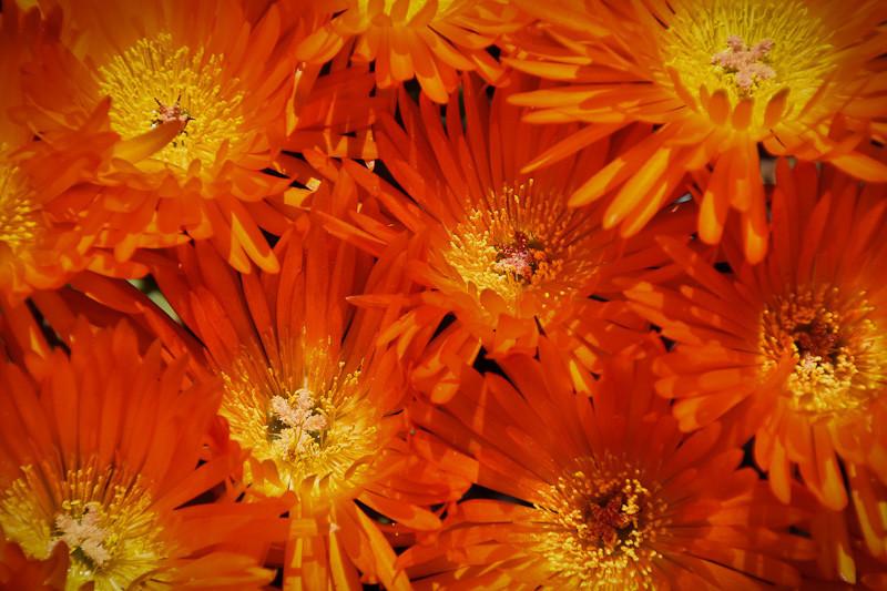 mar 14 - flowers.jpg