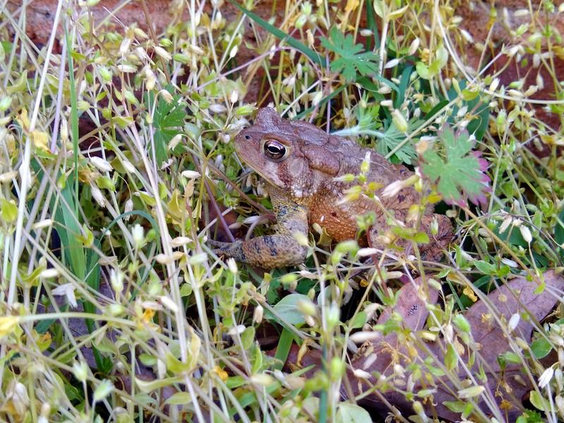Toad-012.jpg