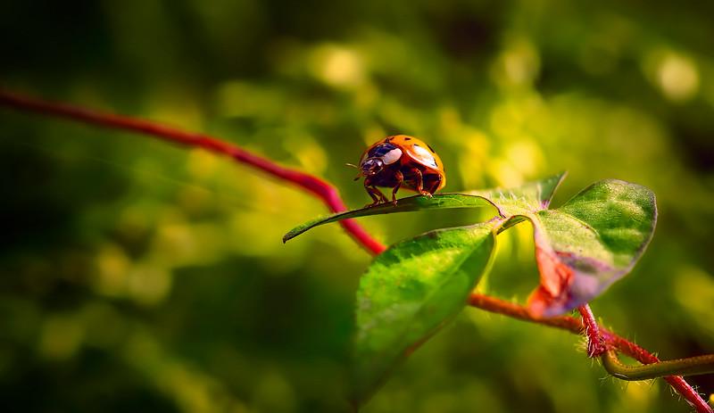 Bugs and Beetles - 18.jpg