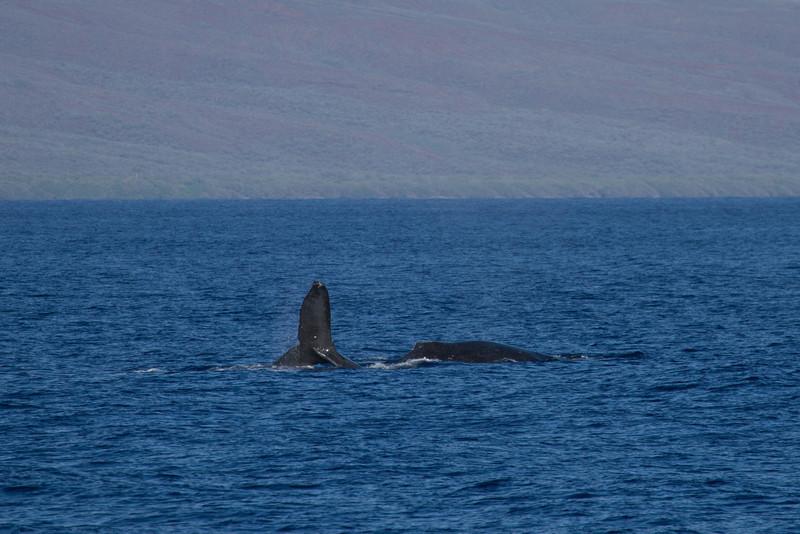 Hawaii2012-976.jpg
