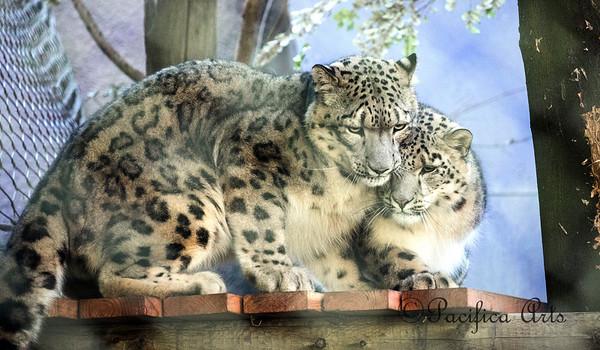 San Francisco Zoo - 2018