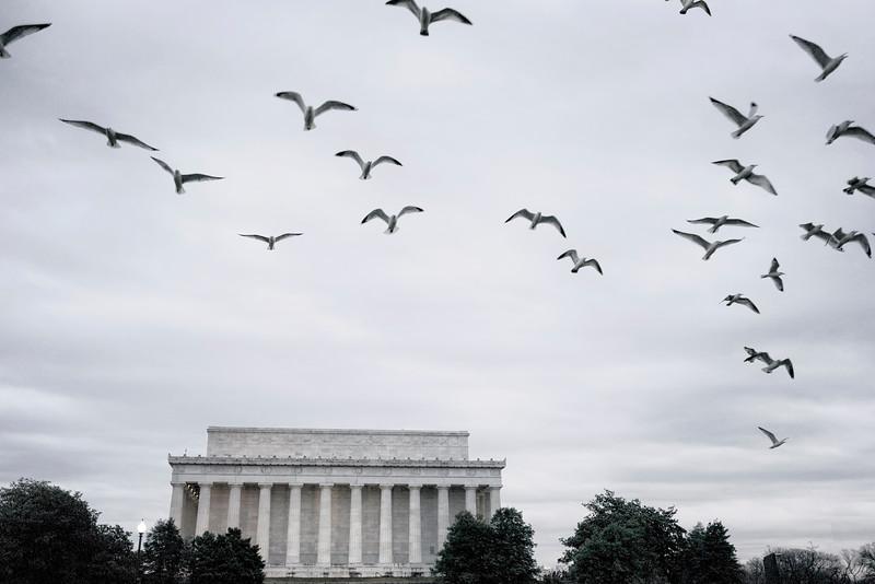 lincolnbirds.jpg