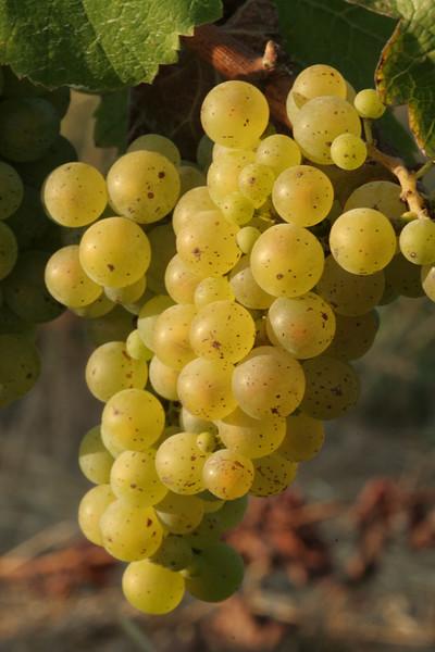 Pey-Marin Vineyards