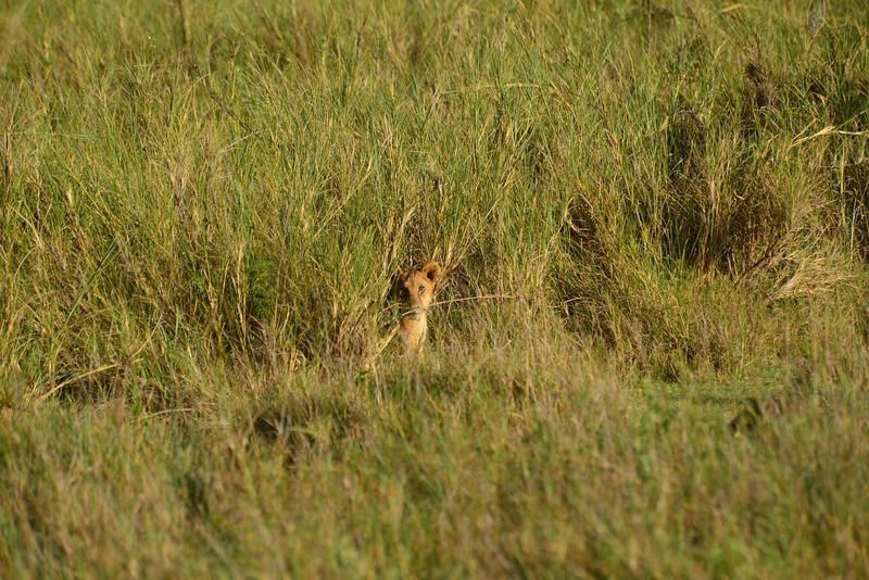 East Africa Safari 314.jpg
