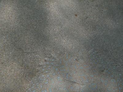 St. Thomas Days 3-4 Underwater Discoveries