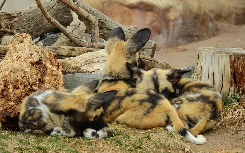 Denver Zoo 2018 (3029).JPG