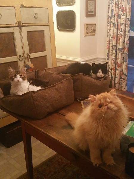Archie, Brewster, Nikko
