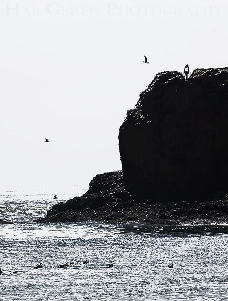 Bluffs along Molera Beach Big Sur, California 0908BS-MB3E1