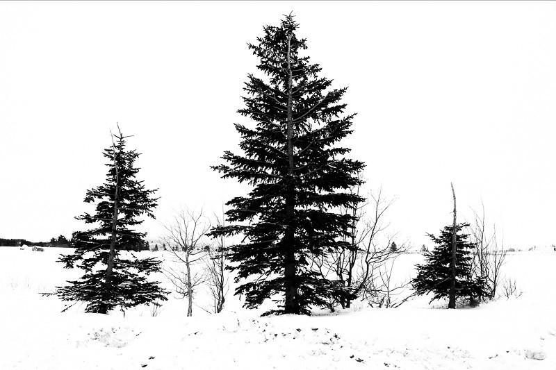 December 29 - Trees in snow, Mammoth lakes, CA.jpg