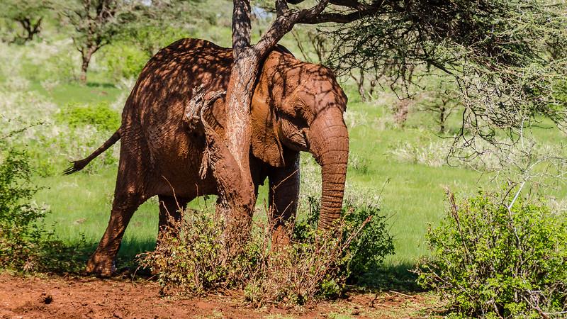 Elephants-0213.jpg