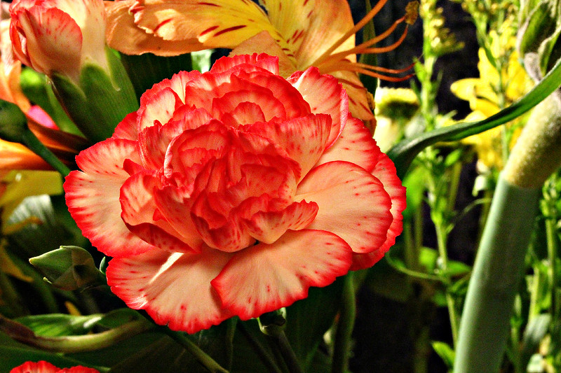 Rose For Momma