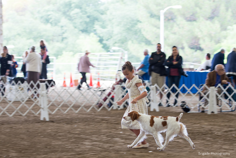 2019 Malibu Kennel Club-9597.jpg