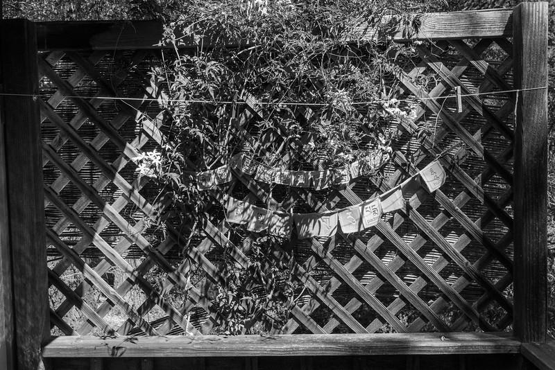 20150412-Vajrapani-Cabins-Lower Deck-Butterfly-9775.jpg