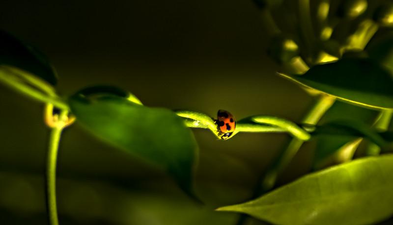 Bugs and Beetles - 28.jpg