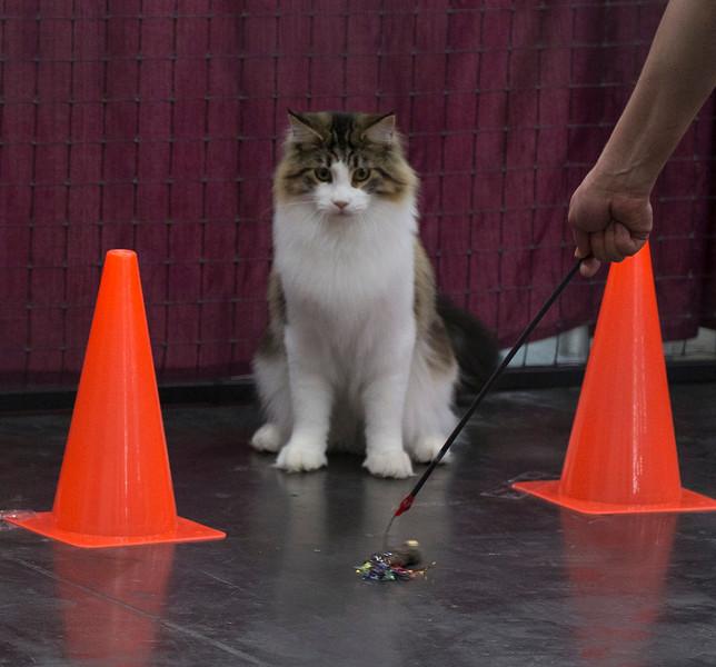 CatShow2014209.jpg
