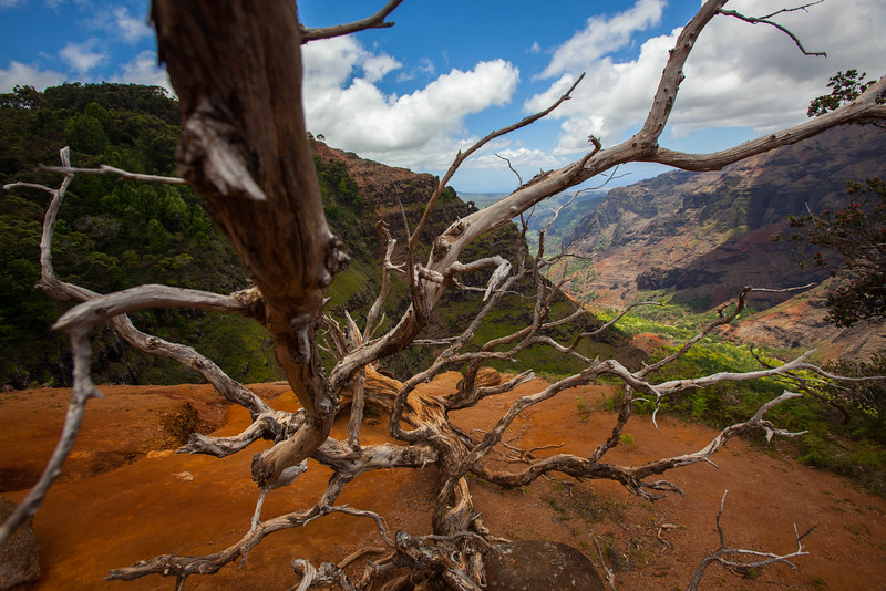 kauai landscape photography-1-13.jpg