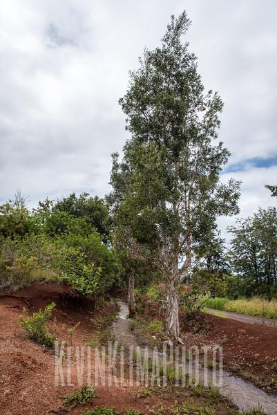 Kauai2017-098.jpg