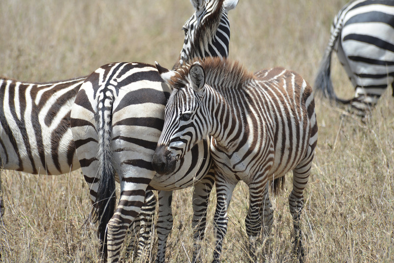 East Africa Safari 330.jpg