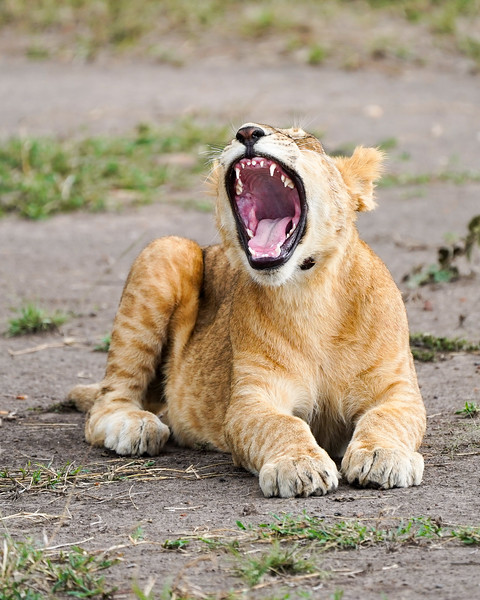safari-2018-118.jpg