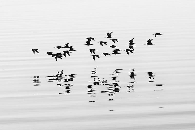 Bird Reflections bw