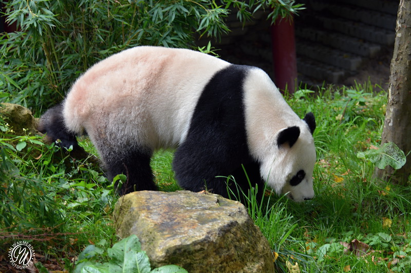 20180909 Ouwehands dierenpark GVW_8662.jpg