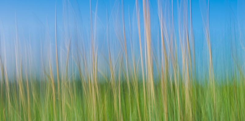 grasses (1 of 1).jpg