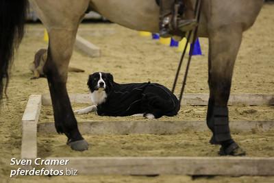 2013-02-14 - Trailnight - Horse & Dog