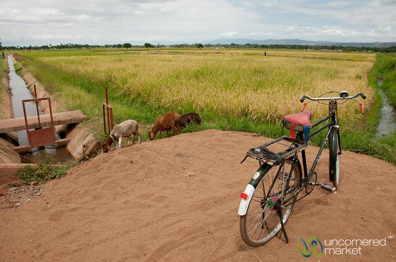 Bicycle in the Rice Fields - Mto wa Mbu, Tanzania