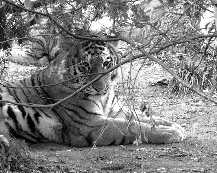 Columbus Zoo 030 N.jpg