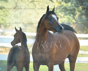 Renae's colt