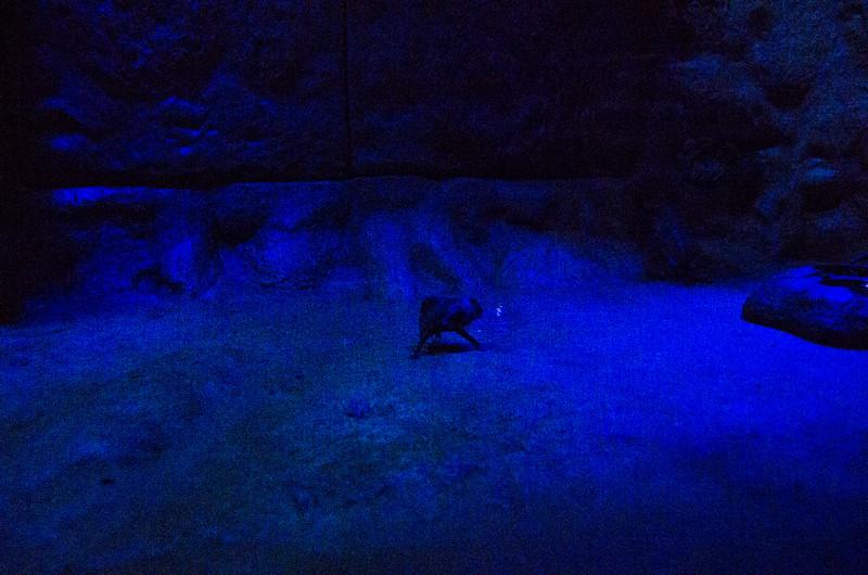 Toledo Zoo Light Show - 2014 - _CAI4540.jpg