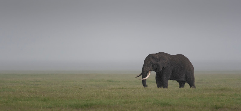 Elephant in the mist
