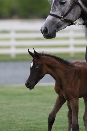 Newest Foal 3/12