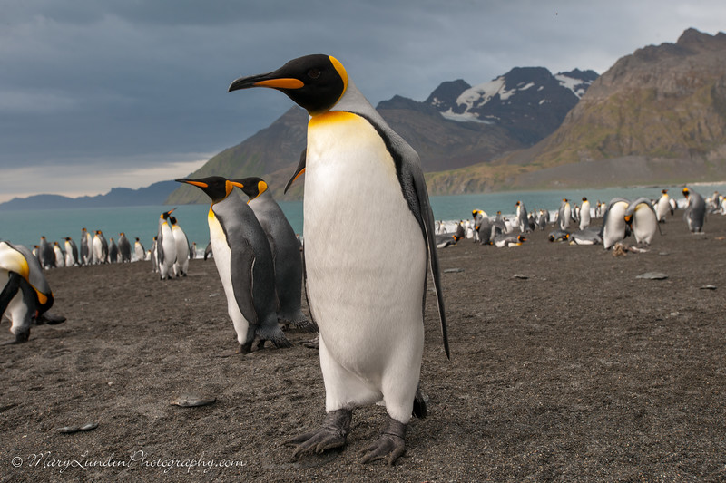 Antarctic-117