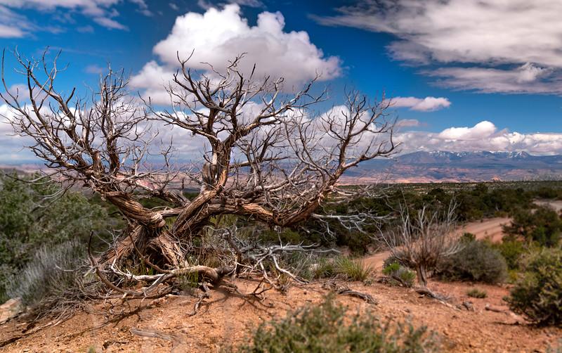 Canyonlands 1.jpg