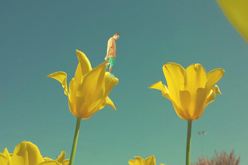 Tulip Hopping.... 95/365 5/6/13