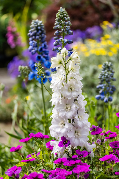 Mickley open gardens 2019-12.jpg