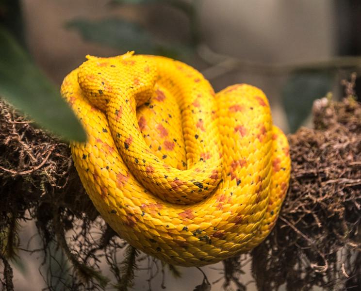 Costa Rica_Reptiles-4.jpg