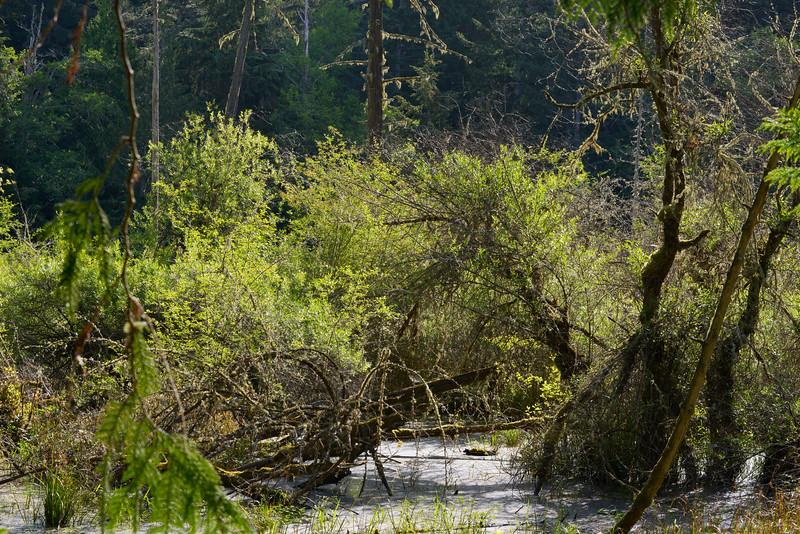 wetlands2_17.JPG