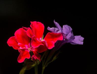 Flowers & Flora