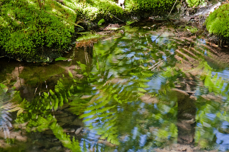 Ferns, reflections