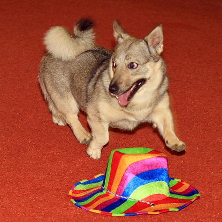 2012_05_17 Dogdance Hemelvaart