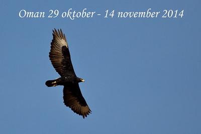 Oman oktober - november 2014