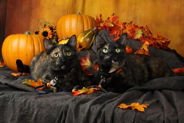 Fall Kitties