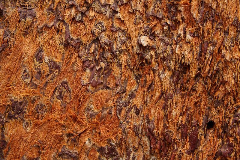 Yosemite 19.JPG