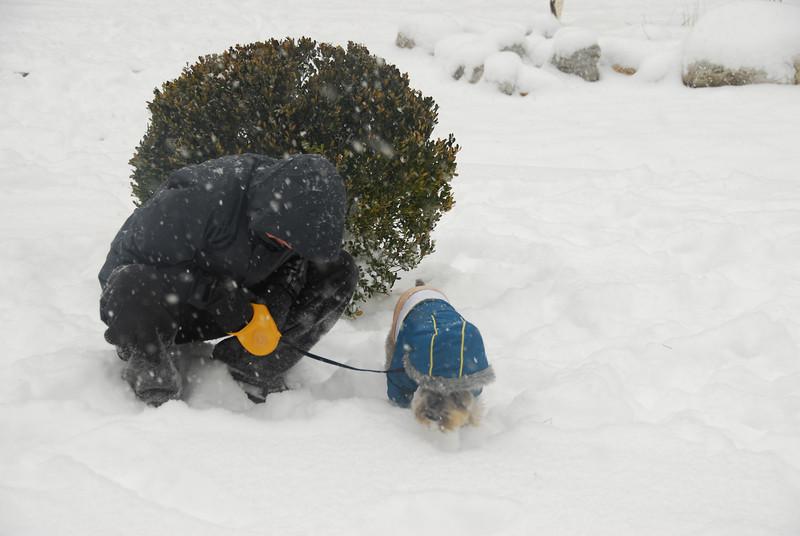 [20100103] 1st 2010 Snow in Beijing (61).JPG