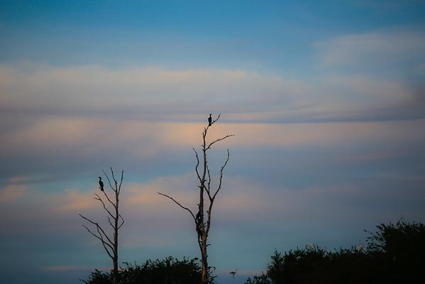 Monkey Island Carrituck Sound