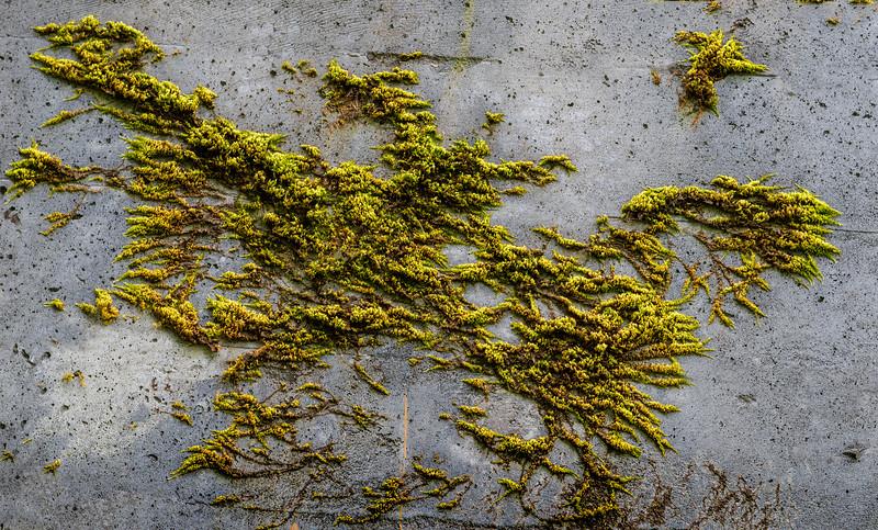 Bird of Moss.jpg